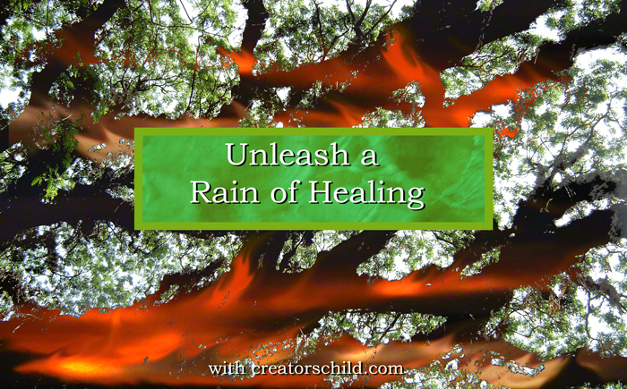 Healing Brazilian Rain Forests